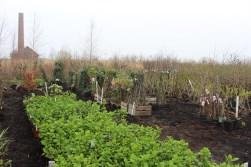 Historische Tuin Aalsmeer : Verkoopdag historische tuin aalsmeer de bloemenkrant