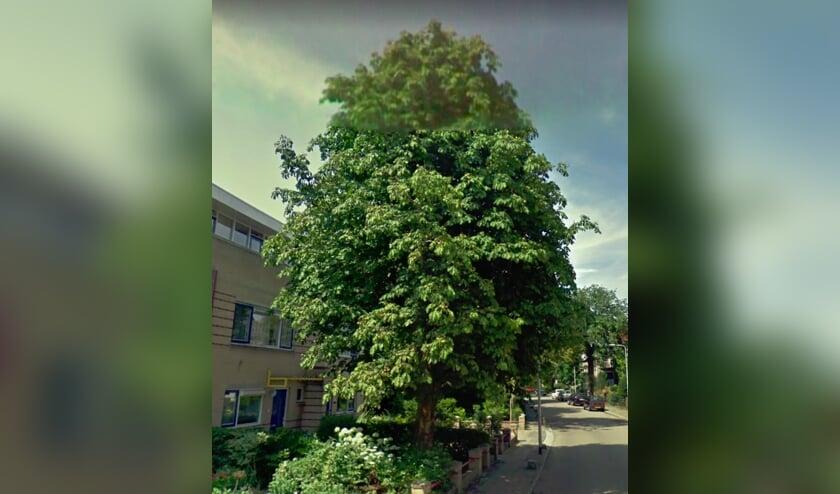 Het huis van de dames Van Vliet is er niet meer; de boom nog wel. | Foto GoogleMaps.