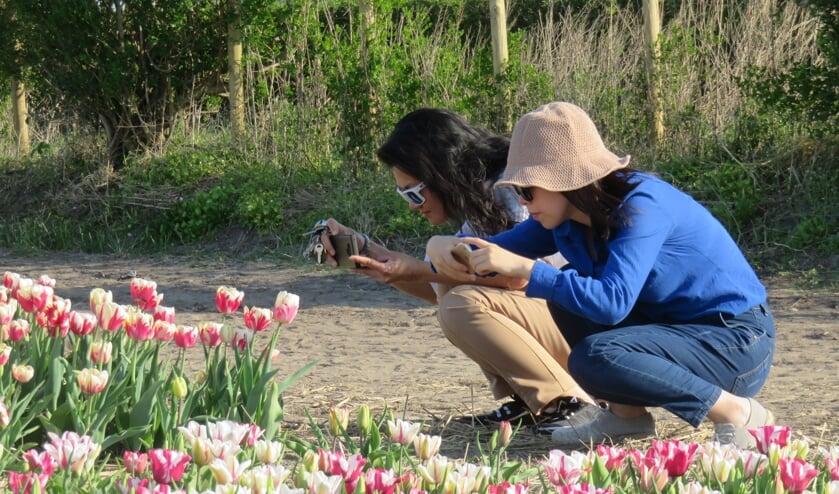 Toeristen weten vaak niet eens dat het gaat om de bol onder de grond en niet om de bloemen erboven.   Foto: pr