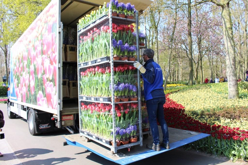 De bloemen gaan op transport. Foto: walter landesbergen © Verhagen