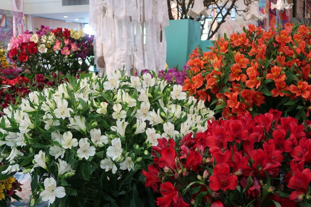 Eén grote ode aan een zo bijzondere bloem.  © Verhagen