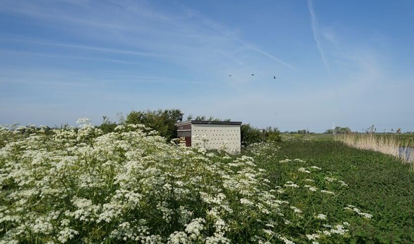 De oeverzwaluwenwand in de Munnikkenpolder ligt verscholen tussen distels en fluitekruid.