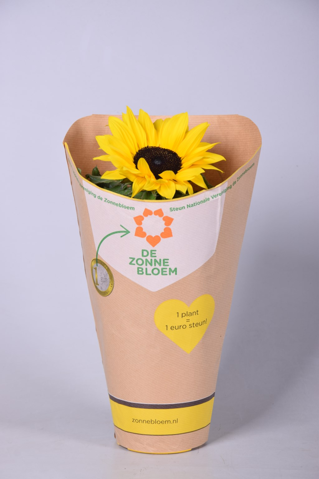 Foto: sunsationsunflower © Verhagen