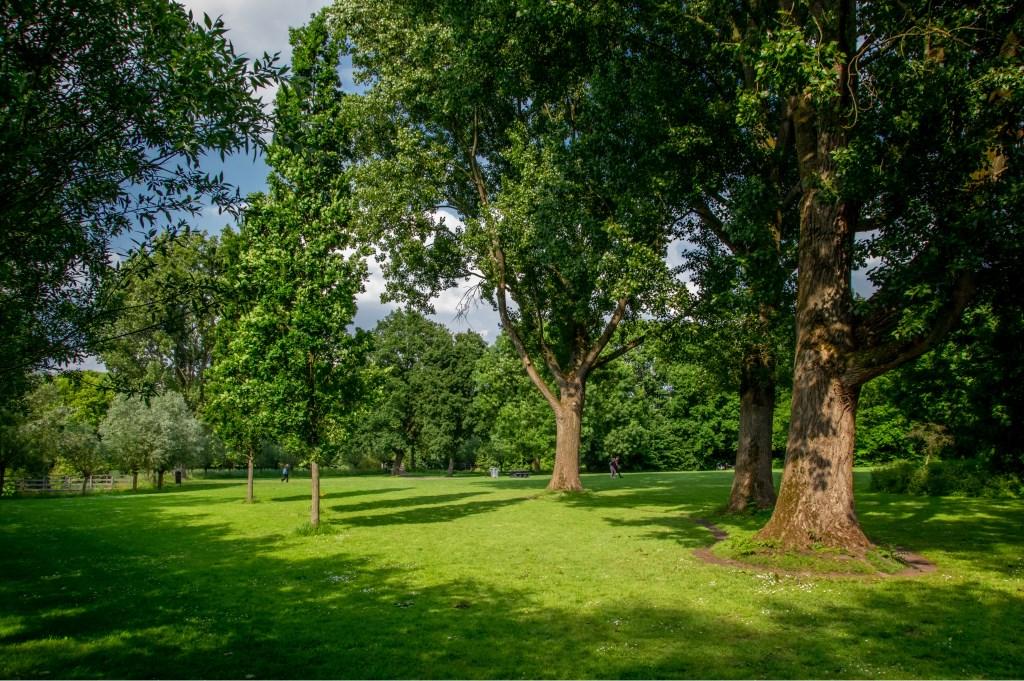 De muziektent zou ook een plek kunnen krijgen op het grote grasveld in De Houtkamp.
