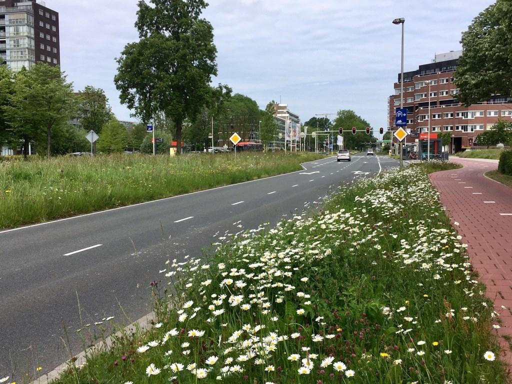 Foto: Wim Schellekens © uitgeverij Verhagen