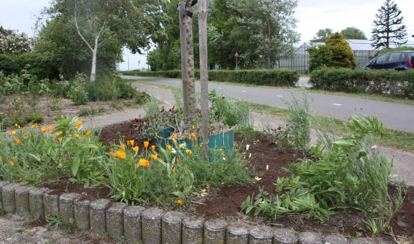 Moedertje Groen wil iedereen enthousiasmeren bloemen te zaaien voor insecten. | Foto: WS