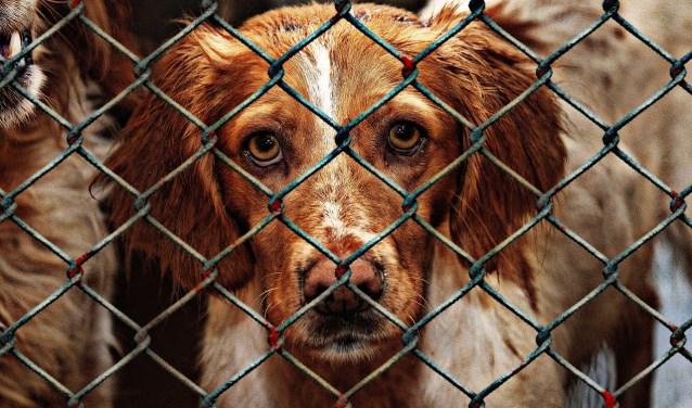 Voor de opvang van honden en katten is geld nodig. Daarom zoekt Dierenasiel Offem collectanten die een uurtje over hebben (of meer....) |