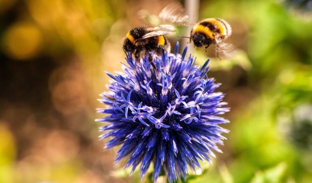 De bijen zijn bij mooi weer zeer actief.