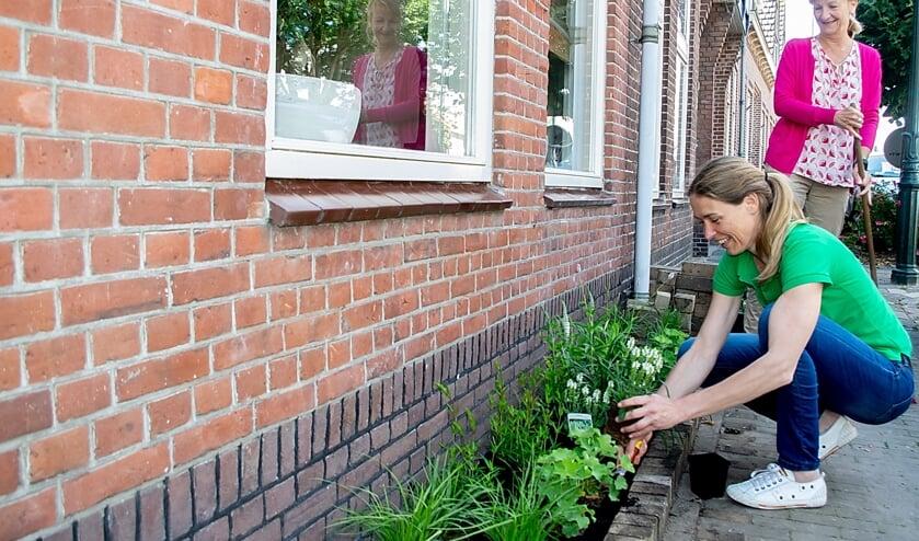 Fanni Tesselhoff zet plantjes in de nieuwe geveltuin van Geertje van der Stempel (rechts). | Foto: J.P. Kranenburg