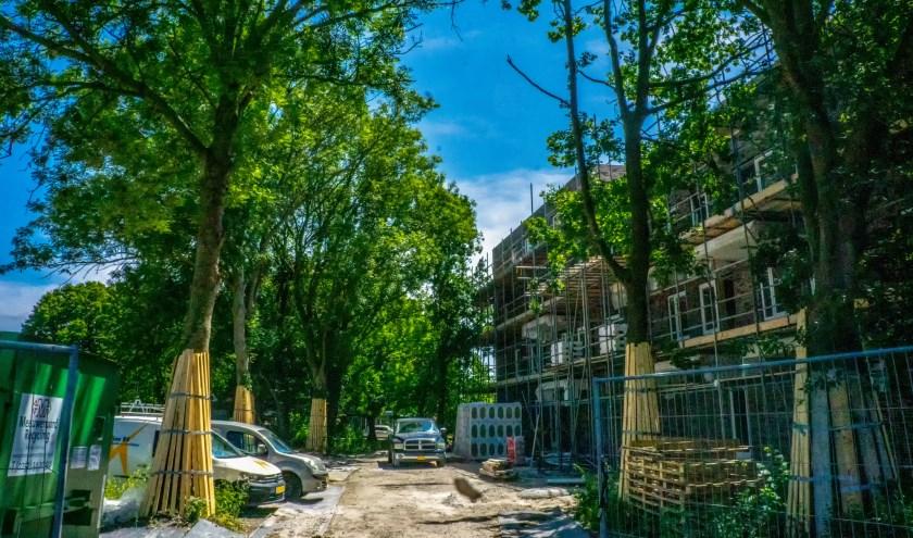 Om genoeg parkeerplaatsen te kunnen realiseren moeten aan de Brittenstein nog tien tot twaalf bomen geveld worden.
