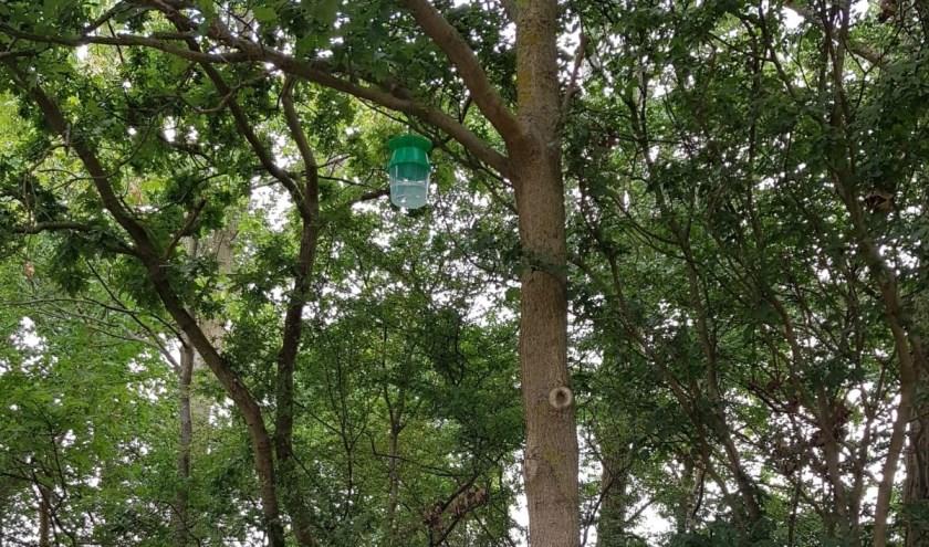 Op verschillende plekken in Noordwijkerhout en De Zilk hangen de vallen inmiddels. | Foto: gemeente Noordwijk