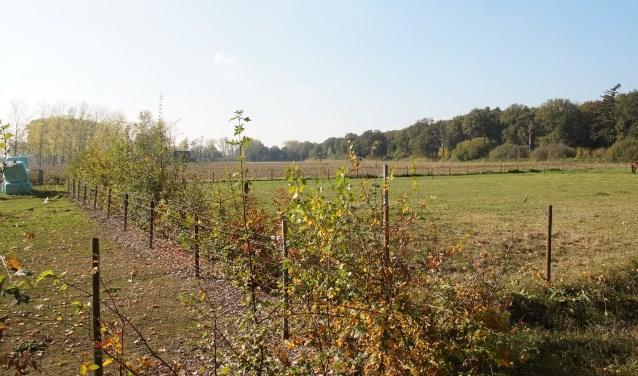 Op deze locatie langs de A2 is het crematorium gepland (Foto, Cor Delissen)