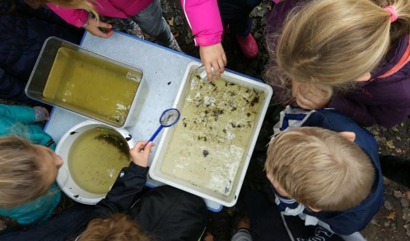 Leerlingen van Het Palet bekijken waterdiertjes samen met een natuurouder.