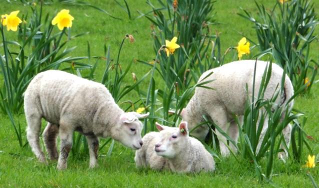 Alle facetten van de lente vastgelegd door Marja Graaf.