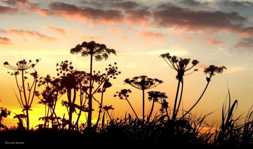 """""""Geen Afrika of Zuid-Amerika maar een Texelse berm bij zonsondergang"""", schrijft Aris Bremer."""