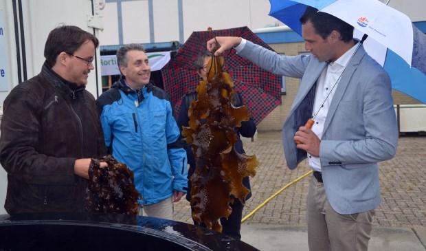 Staatssecretaris Martijn van Dam van Economische Zaken bij het Zeewiercentrum op het terrein van het NIOZ. (Foto Bert Aggenbach)