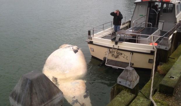 De dode walvis bij Het Sop.