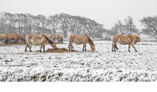 Winterse omstandigheden, vastgelegd door Justin Segerink van Justin Sinner Pictures.