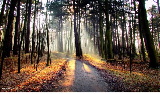 Herfst in winters bos. (Foto Aris Bremer)
