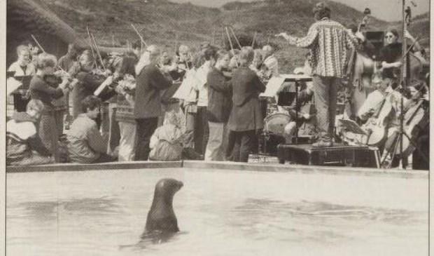 Een zeehond toont belangstelling.