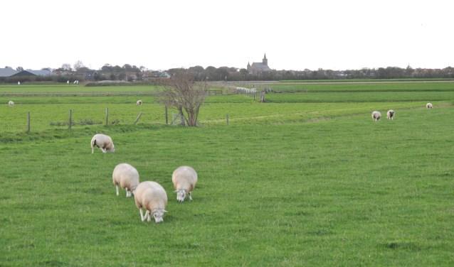 Texels landschap.