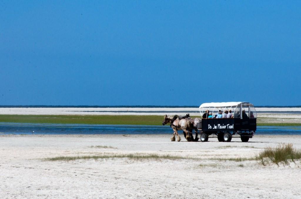 Een prachtige Slufter met zeekraal Foto: Gerrit Verhoeven © Mediabureau Langeveld & De Rooy