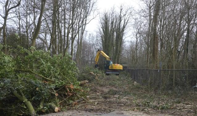 Ook de bomenkap komt ter sprake in de komende editie van TipTexel.nl.