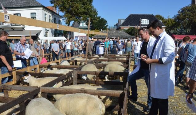 Inspecteurs van het Texels Schapenstamboek in Noord-Holland keuren de dieren.