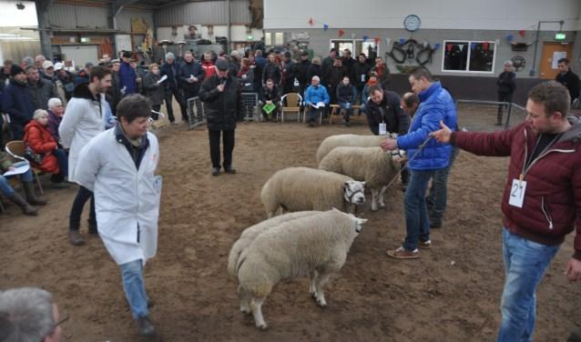 Keurmeesters Marjo van Bergen en Johan Knaap keuren in 2018 de schapen.