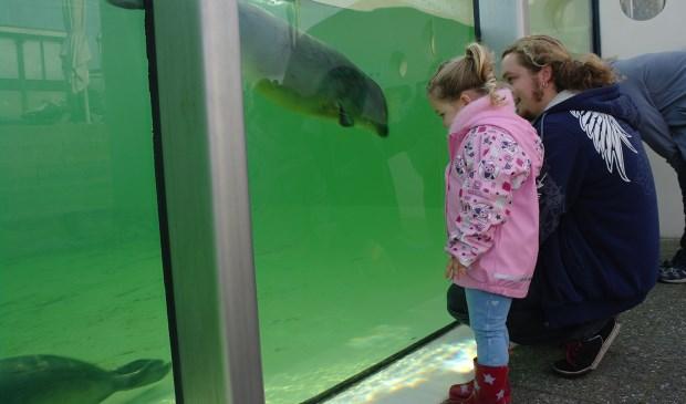 vader en dochtertje kijken naar zeehond in R-bassin
