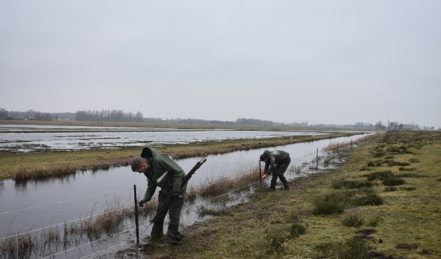 Het plaatsen van kilometers stroomdraad in de Zwagermieden neemt enkele weken in beslag.