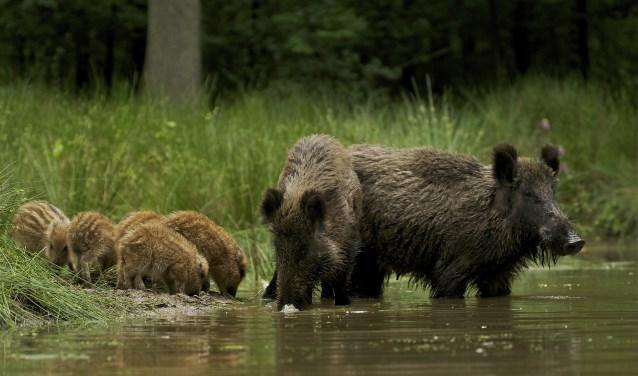 Wild (foto: filmdepot.nl)