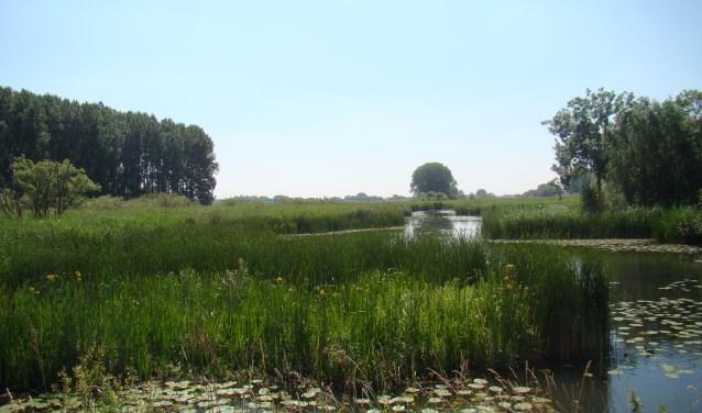 Natuur 't Gelders Eiland (foto: Jannet Tigchelaar)