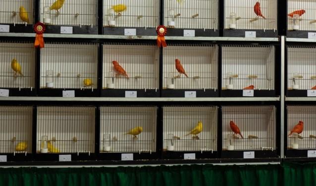 Vogelshow. (foto: T. Boetzel)
