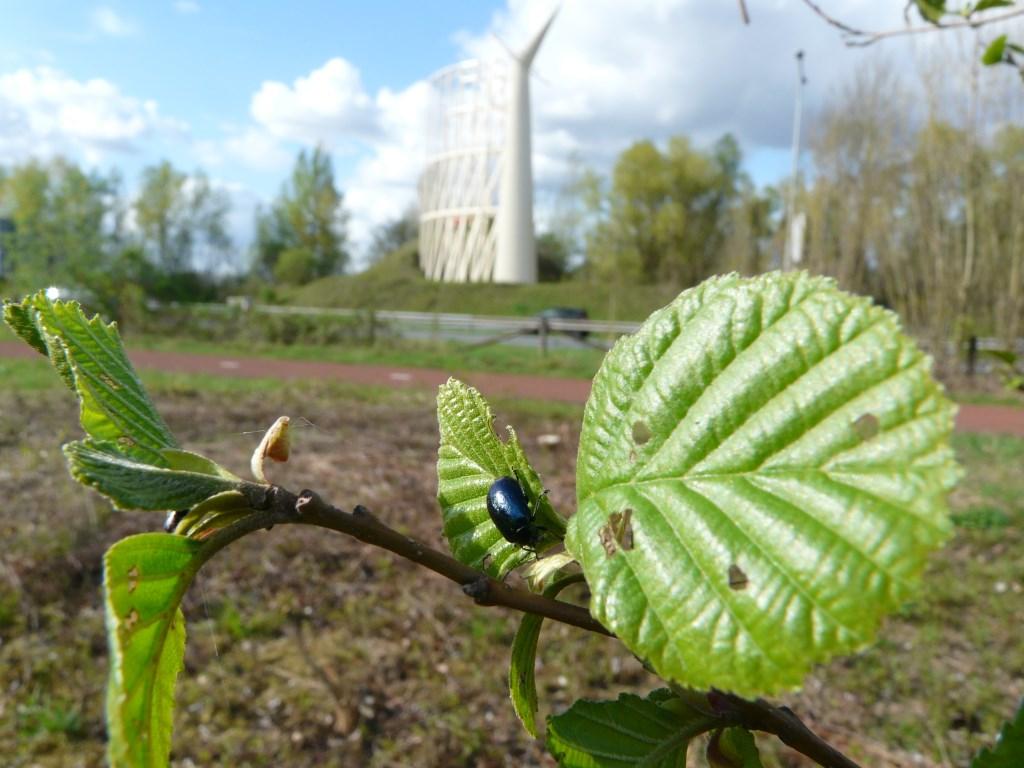 Insectencursus op Arnhemse locatie Foto: Maria Pompe © Hét Gemeentenieuws