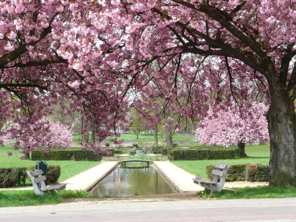 Groencursus voorjaar Foto: Maria Pompe © Hét Gemeentenieuws