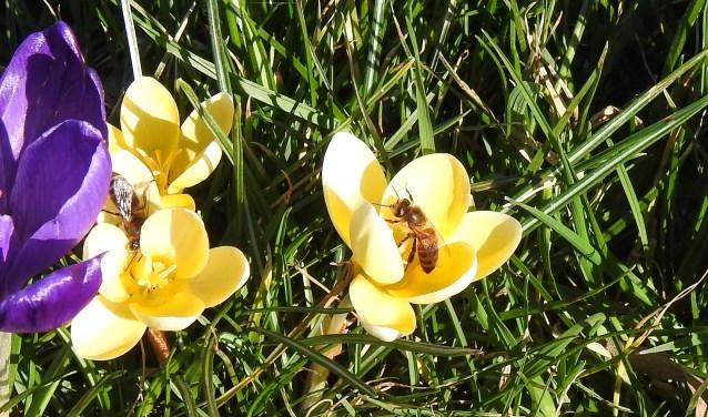 Bezige bijen. (foto: Kitty Peters)