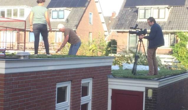 De aanleg van een groen dak in de Arnhemse wijk Molenbeke.(foto:  Aart van Cooten)