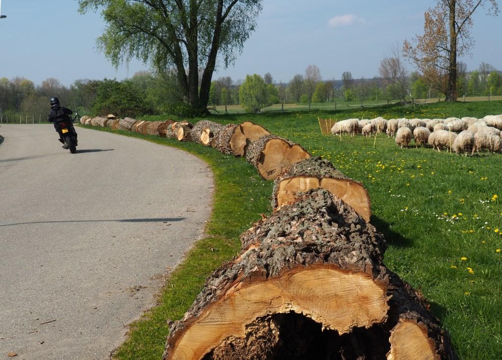 natuurlijke wegmarkering Foto: Maria Pompe © Hét Gemeentenieuws