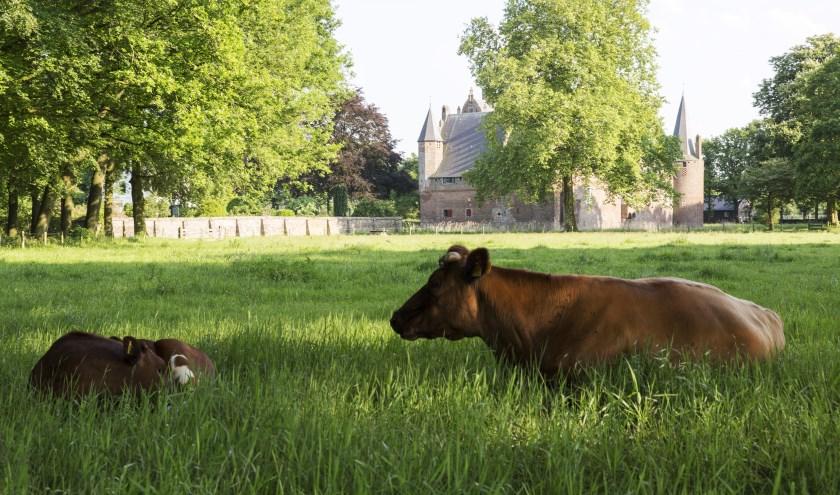 Hernen-koeien. (foto: Ton Rothengatter)