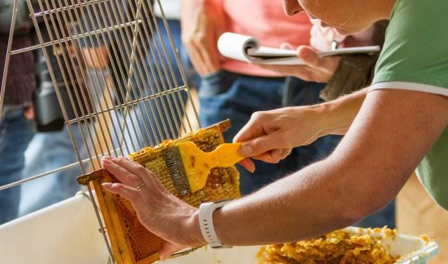 Raten klaarmaken voor het honing slingeren. (foto: Reverse Pixels Photography)