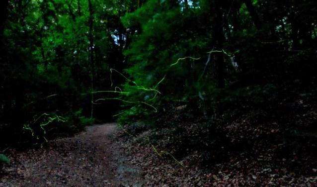 de groene lijnen zijn de beweging van vuurvliegjes in het donker bos. In het echt levendiger dan op deze foto.