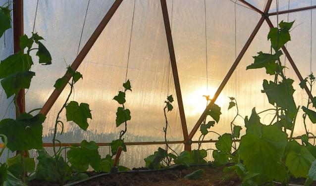 Groeiende komkommerplanten in de bijzondere kas