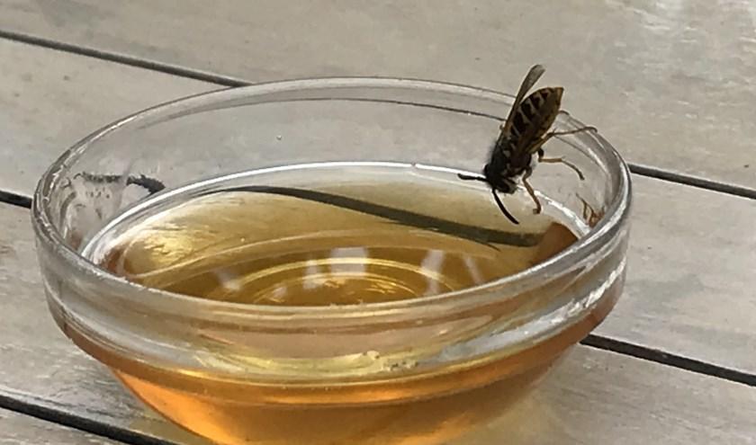 Wesp eet 'mijn' honing.